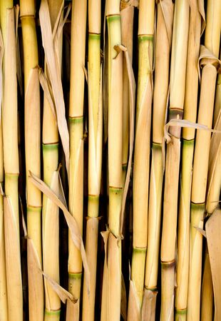 harmless: Cane texture used as fence or sunroof in Mediterranean Stock Photo