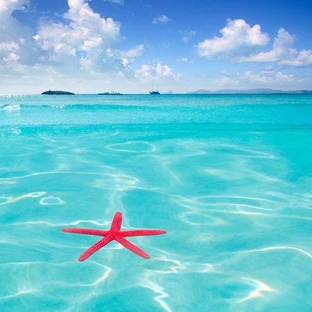 riviera maya: Red starfish floating on perfect tropical sea in ripple beach