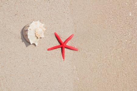 seashell and starfish in white sand beach as summer vacation symbols photo