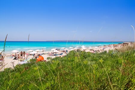 els: Formentera migjorn Els Arenals beach in summer vacation at Spain