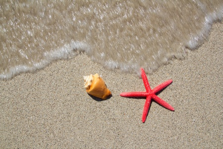 beach starfish and seashell with wave coming to shore photo