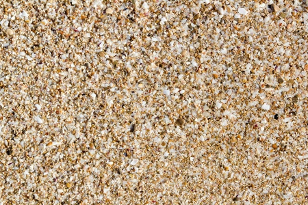 Ibiza sand macro soil texture with little cracked shell bits photo