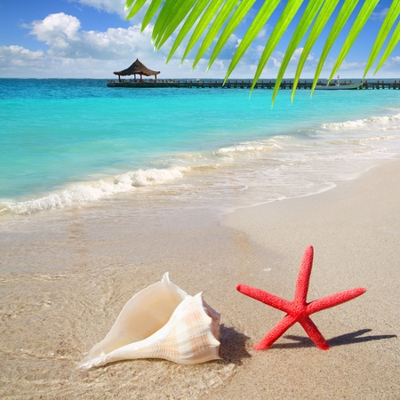 beach with starfish and seashell in white sand and tropical hut Stock Photo