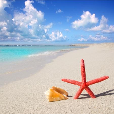 formentera: beach starfish and seashell on white sand of Formentera Illetes Stock Photo