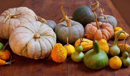 Halloween pumpkin still life on wood table with various species photo