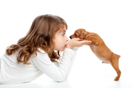 small dog: Brunette profile girl with dog puppy mascot mini pinscher on white background