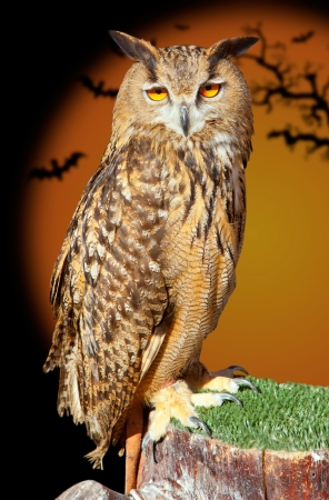 Bubo bubo eagle owl night bird in halloween bat orange background photo