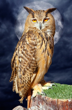 Bubo bubo eagle owl night bird in full moon cloudy dramatic night Stock Photo - 13601188