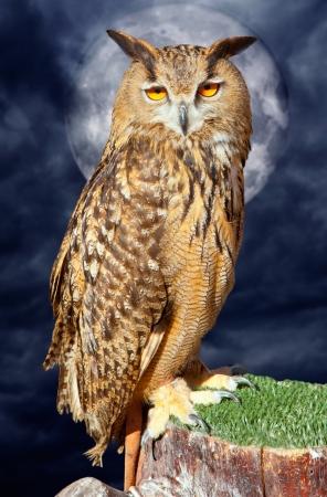 Bubo bubo eagle owl night bird in full moon cloudy dramatic night Stock Photo - 13601188