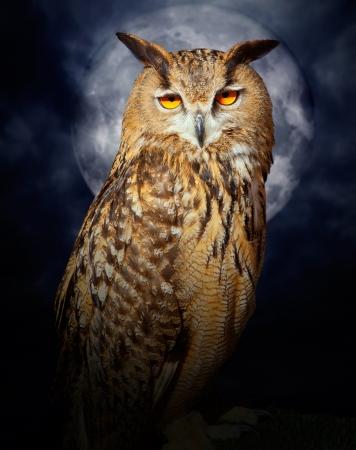 buhos: Bubo bubo búho pájaro de la noche en luna llena la noche dramática nublado Foto de archivo