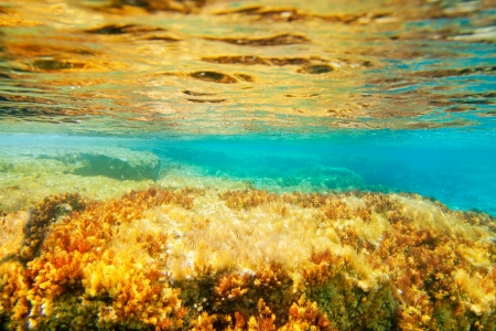 alga: Ibiza Formentera underwater anemone seascape in golden and turquoise