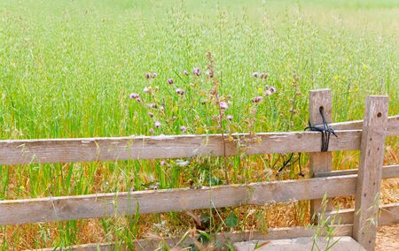 Balearic green meadow field in Formentera with wood traditional fence Stock Photo - 14285829