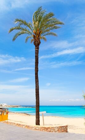 Els Pujols formentera beach with turquoise water and palm trees in balearic islands photo