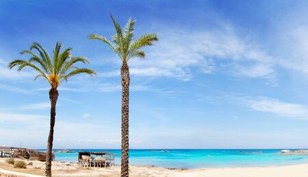 pujols: Els Pujols formentera beach with turquoise water and palm trees in balearic islands