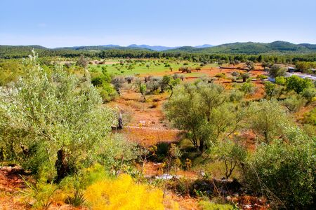 red clay: Ibiza island landscape with agriculture fields on red clay soil