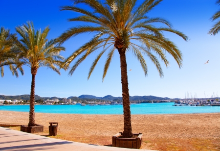 sant: Ibiza Sant antoni de Portmany Abad beach with palm trees