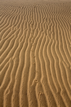 Desert dunes sand texture in Maspalomas Gran Canaria at Canary islands photo