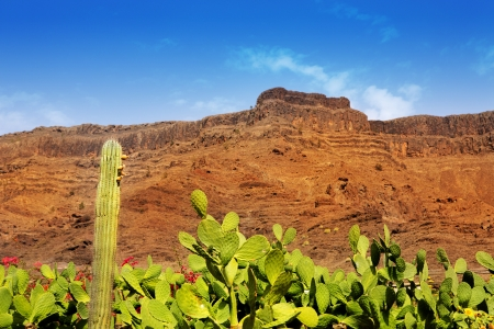 Gran Canaria Mogan cactus and red mountain landscape photo