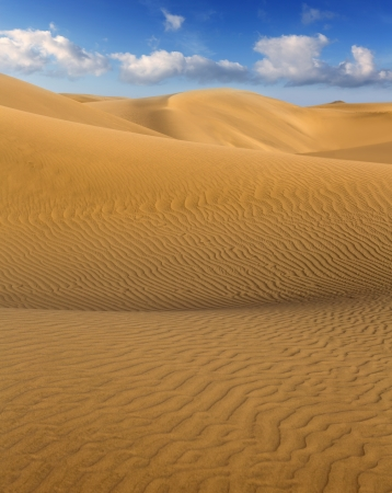 canaria: Desert sand dunes in Maspalomas Oasis Gran Canaria at Canary islands