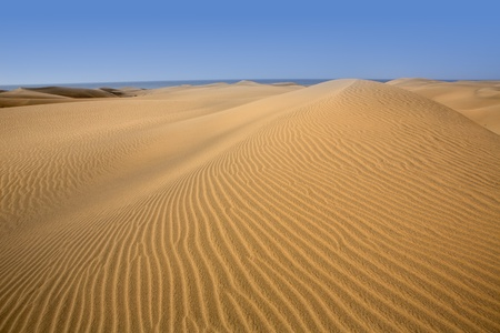 canaria: Desert dunes sand in Maspalomas Oasis Gran Canaria at Canary islands