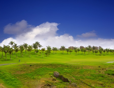 canarian: Gran Canaria Meloneras golf green grass and palm trees in Canary Islands