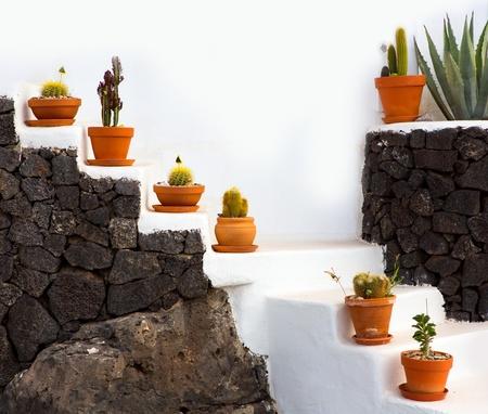 ollas de barro: Cactus en Lanzarote ollas de barro sobre escaleras blancas en las Islas Canarias