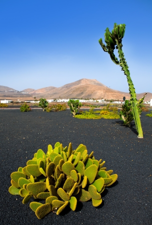 lanzarote: Lanzarote Yaiza white village with cactus and mountains in Canary Islands