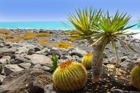 lanzarote: El Golfo in Lanzarote cactus of Atlantic shore at Canary Islands Stock Photo