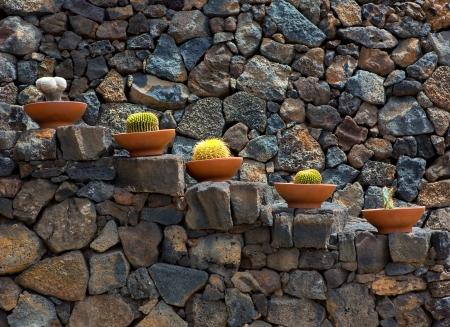 cactus desert: Lanzarote Guatiza cactus garden pots in a row at Canary Islands