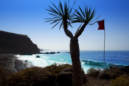 canarian: Beach el Bollullo black sand from Draco agave near Puerto de la Cruz
