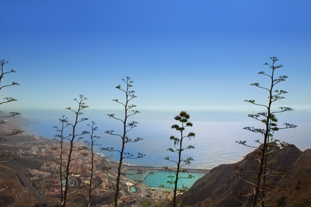 Aerial view Santa Cruz de la Palma with agave cactus in canary Islands photo