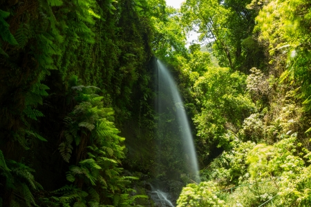 laurel mountain: Los Tilos waterfall  Laurisilva in La Palma laurel forest at Canary Islands
