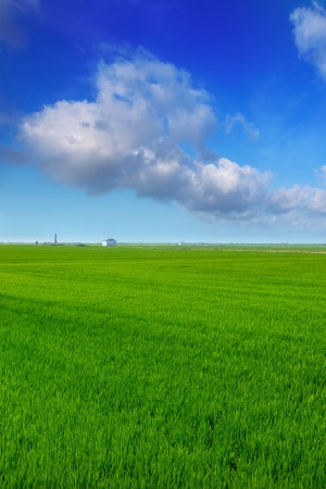 El Saler in Valencia rice fields green spring meadow under blue sky photo