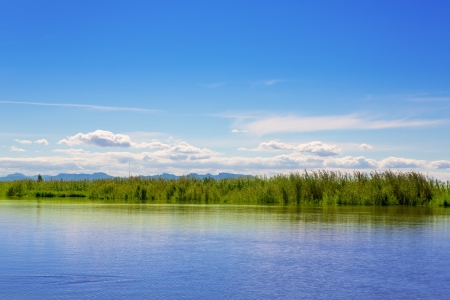Albufera lake in Valencia in a sunny blue day with  green canes and reeds shore Stock Photo - 15907584