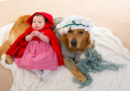 fur hood: Baby Little Red Riding Hood with wolf dog dressed as grandma golden retriever