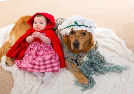 perros vestidos: Capucha Bebé Little Red Riding with perro lobo disfrazado de abuelita golden retriever