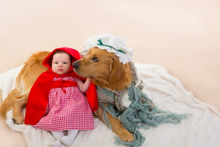 Baby Little Red Riding Hood with wolf dog dressed as grandma golden retriever photo