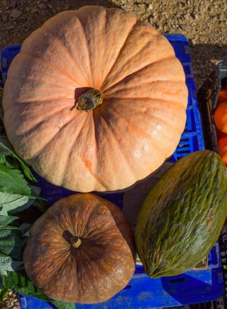 Melon and Pumpkin in autumn fall at market in Mediterranean photo