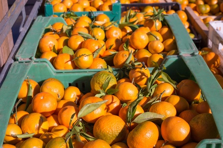Orange tangerine fruits in harvest basket boxes in a row Stock Photo - 17613575