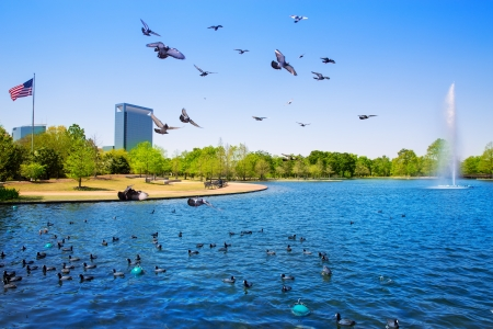 viewer: Houston Mc govern lake with doves spring water and green grass in Texas