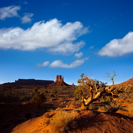 butte: Monument Valley West Mitten Butte with dried branches Utah