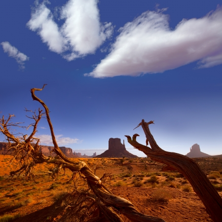 Monument West Mitten Butte in morning from dired tree branches Utah Stock Photo