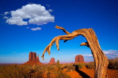 Monument Valley West and East Mittens and Merrick Butte with dried branch Utah