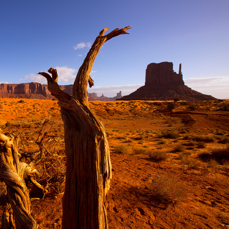 western usa: Monument West Mitten Butte in morning from dired tree branches Utah Stock Photo