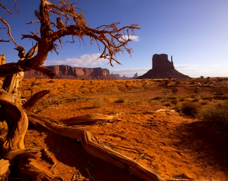 national monuments: Monument West Mitten Butte in morning from dired tree branches Utah Stock Photo