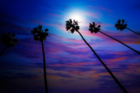 California palm trees group sunset with colorful sky photo