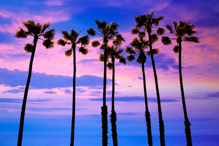 california beach: California palm trees group sunset with colorful sky