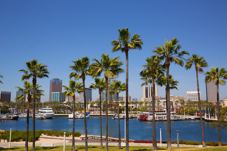 long bay: Long Beach California skyline with palm trees from marina port USA