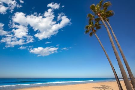 three palm trees: Newport beach California three palm trees group on shore Stock Photo