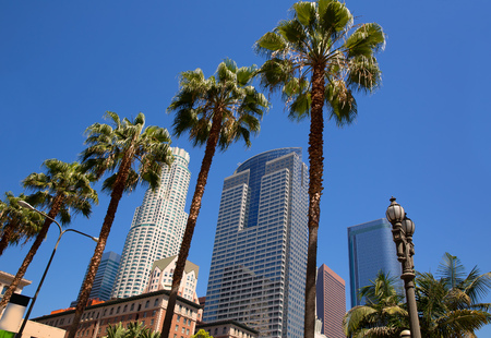 pershing: LA Downtown Los Angeles Pershing Square palm tress and skyscrapers